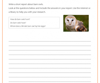 Research Activity - Barn Owl
