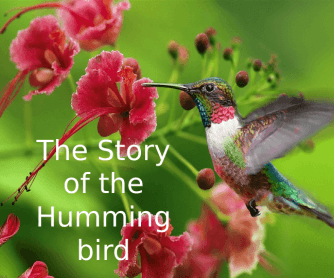 The Story of the Hummingbird PPT