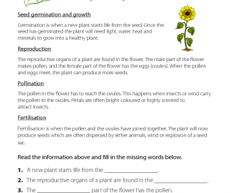 Earth Day - Life Cycle of a Plant
