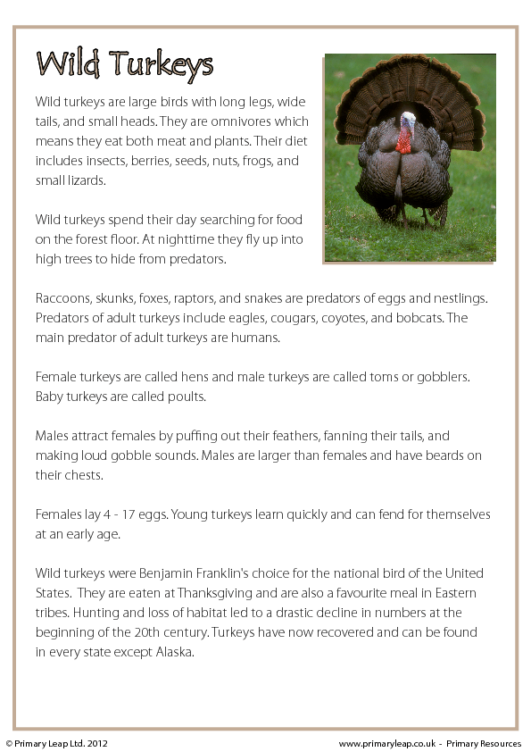 Reading Comprehension Wild Turkeys