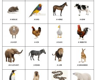 Bingo - Animals