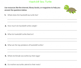 Research Activity - Hawksbill Sea Turtles