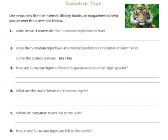 Research Activity - Sumatran Tiger