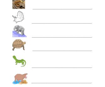Animal Responses