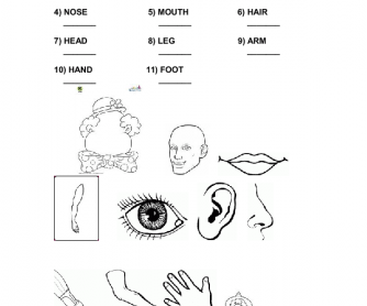 Face Vocabulary