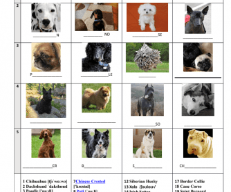 Names of Dog Breeds with Pictures