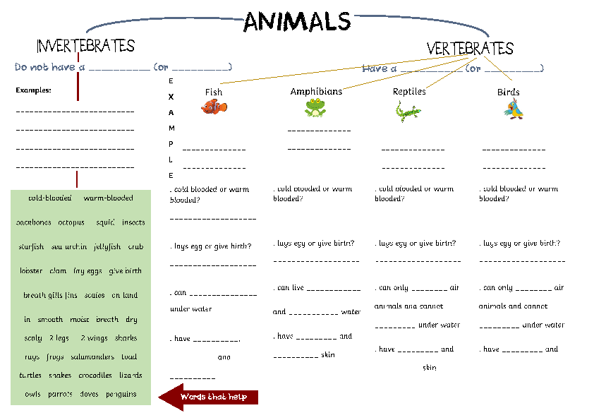 629 FREE Animals Worksheets – Animal Worksheets