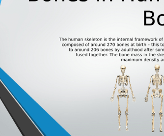 Skeletal System - Bones in the Human Body