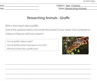 Researching Animals - Giraffe