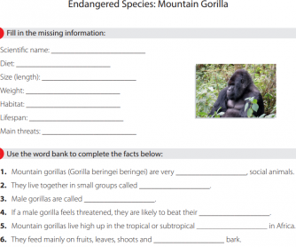 Endangered Species - Mountain Gorilla