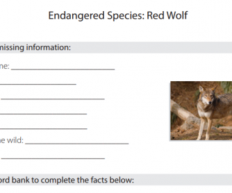 Endangered Species - Red Wolf Research