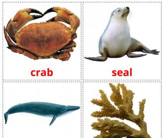 20 Realistic Sea Animals Flashcards