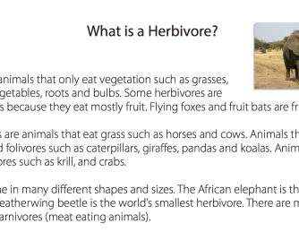 Reading Comprehension - What Is A Herbivore?