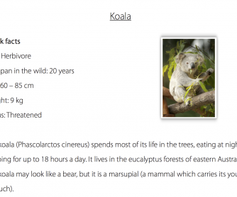 Reading Comprehension - Facts About Koalas
