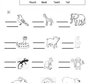 Animal Body Parts - Grade 2 Worksheet